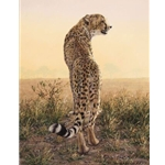 First Light - Cheetah by wildlife artist Simon Combes