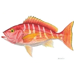 Silk Snapper by Flick Ford