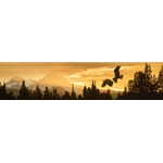 Cascade Skyline - Bald Eagles flying at Sunset by wildlife artist Rod Frederick