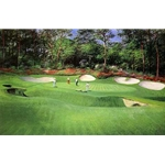13th Hole at Augusta by Peter Ellenshaw