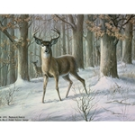 Alert Whitetail Deer by wildlife artist Maynard Reece