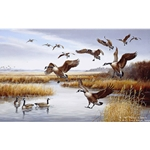 Careful Landing Canada Geese by Iowa artist Maynard Reece