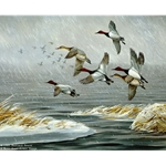 The Muskrat House Canvasback by Iowa artist Maynard Reece