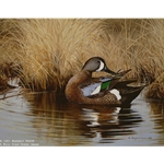 Preening Blue Wing Teal by wildlife artist Maynard Reece