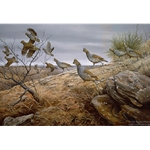 Running Blues Scaled Quail by wildlife artist Maynard Reece