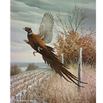 Upland Series III Ring-necked Pheasant by wildlife artist Maynard Reece