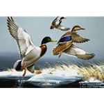 Winter Solitude Mallards by wildlife artist Maynard Reece