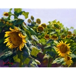 Sunflowers Near Cortona by artist June Carey