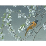 Baltimore Oriole and Plum Blossoms by Robert Bateman