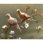 Doves and Apple Blossoms by wildlife artist Joe Hautman