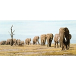 The Last Elephants by African wildlife artist Simon Combes