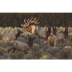 Social Hour - autumn elk herd by wildlife artist Kyle Sims