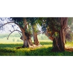Eucalyptus Trunks by California artist June Carey