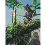 Moonlighting - Margay at temples of Tikal by wildlife artist Rod Frederick