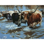 Crossing the Big Sandy - longhorns by artist Bonnie Marris