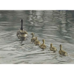 Canada Goose and Goslings by Robert Bateman