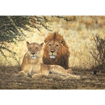 Midday Siesta - Lion Pair resting by african wildlife artist Simon Combes