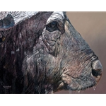 Titan I - cape buffalo face off by African wildlife artist Guy Combes