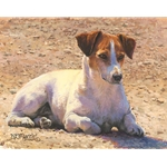 Tough as Stones - Jack Russell Terrier by artist Bonnie Marris