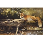 Lazy Days on the Big Crooked - Red Fox resting on log by artist Bonnie Marris