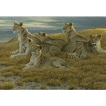Family Gathering - Lioness and Cubs by Robert Bateman