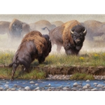 Yellowstone Face Off - Bison by artist Kyle Sims