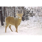 Winters Beauty - white-tailed deer by artist John Bye
