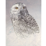 White Out - snowy owl portrait by Andrew Denman