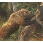 ~ Sweet Tooth - grizzly bear at bees nest by Bonnie Marris