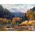 Rocky Mountain Paradise - horses crossing mountain stream by western artist Tim Cox