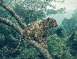 The Solitary Hunter - Leopard by wildlife artist Simon Combes