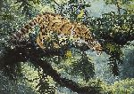 Jungle Phantom  - Clouded Leopard by wildlife artist Simon Combes