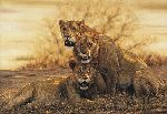 Hot Lions - Three young males by african wildlife artist Simon Combes