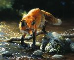 Frogs for Breakfast - Red fox by wildlife artist Bonnie Marris