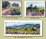 Studies of Wine Country California by June Carey
