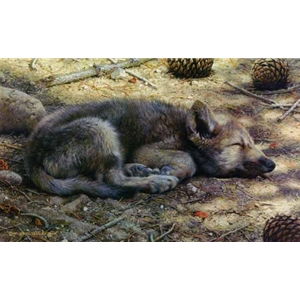 Down for the Count - Wolf Pup by wildlife artist Carl Brenders